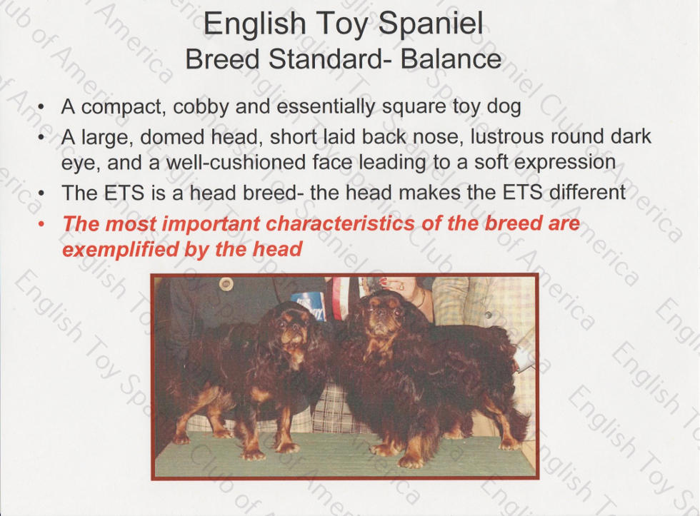 Breed Study Presentation