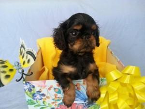 Reid Puppy