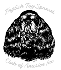 A HISTORY OF THE ENGLISH TOY SPANIEL