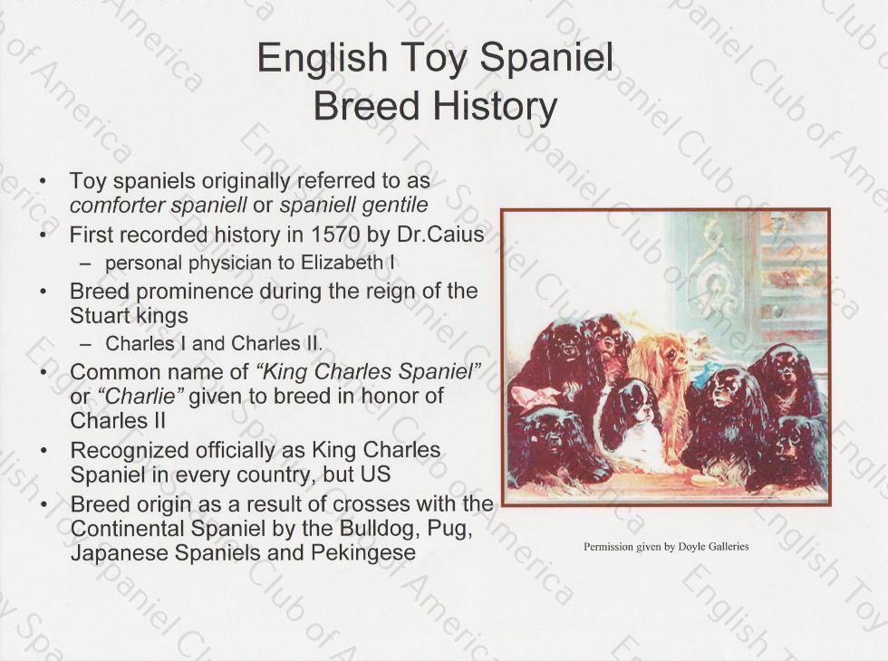 Breed Study Presentation