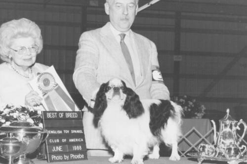 1988 Best of Breed Winner