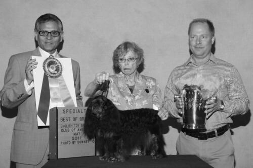 2011 Best of Breed Winner