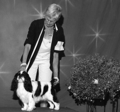 2012Best of Breed Winner