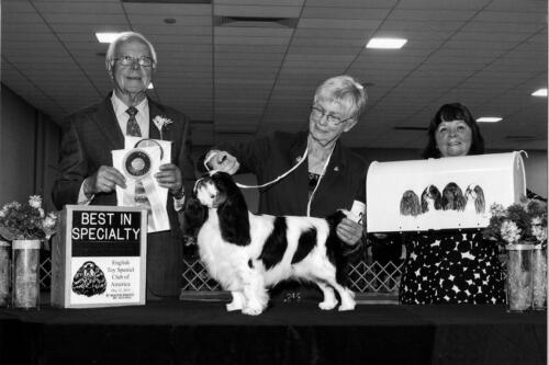 2014 Best of Breed Winner