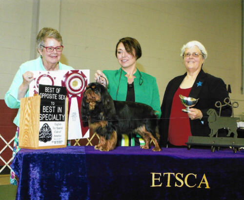 Best of Opposite Sex to Best of Breed - Ch Tudorhurst Black Pearl At Sanchi - Breeder: Mrs. A M Pennington	<br>Owner: Bonnie Miller DVM