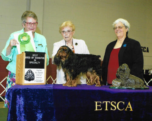 Best Bred By Exhibitor In Specialty - Suruca's Cabinet Maker - Breeder/Owner: Susan Jackson