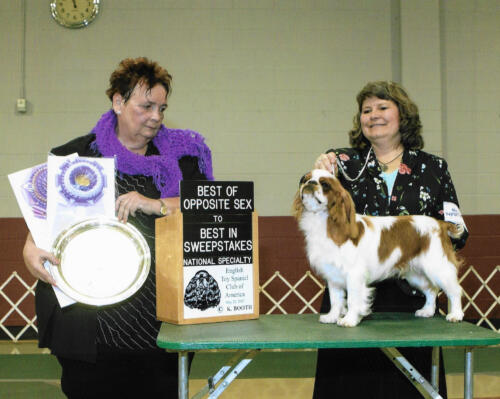 Best of Opposite Sex To Best In Sweepstakes - Madde's Flash Of Brillance - Breeders/Owners: Debora Bell and Robert Ekle