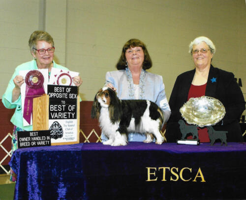 Best of Opposite Sex to Best of Variety (Blenheim & Prince Charles) - GCH Backroad Brookhaven's Wind In The Willow - Breeder: Susan Plance- Owner: Jeanne Schoff