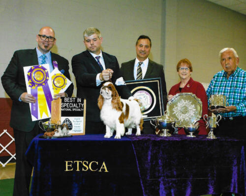 2016 Best of Breed
