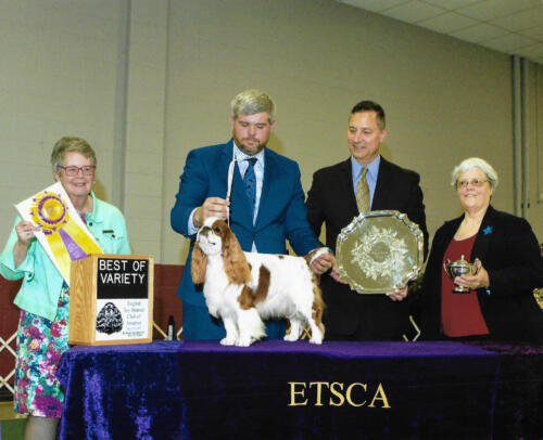 Best Of Variety (Blenheim & Prince Charles) - GCH Clussexx Cream and Crimson - Breeders: Doug Johnson, Jamie Hubbard, Jeane Haverick - Owners: Patti and Richard Caldwell and Tobi Adams